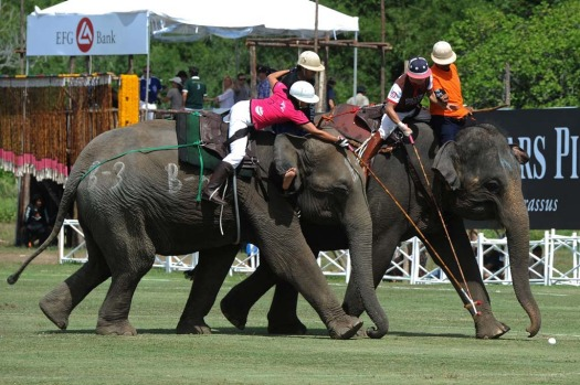 A polo player from the Elephant Story team (brown) fights for the ball with a member of the Nellies team (pink) during ...