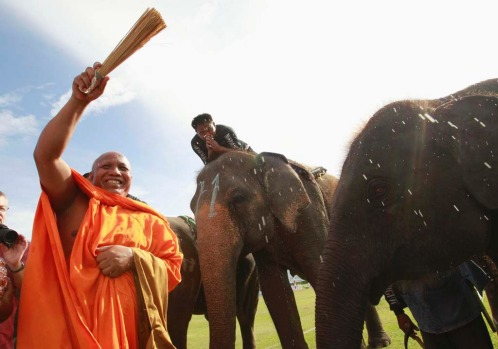 A Buddhist monk blesses elephants during the opening the the 11th King's Cup Elephant Polo Tournament.