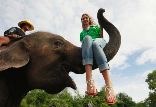 A tourist sits on an elephant's trunk during the opening of the 11th King's Cup Elephant Polo Tournament.