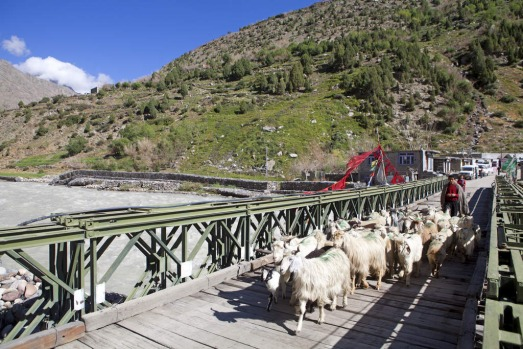 Goat herd crossing a road bridge at Darcha on the Manali-Leh highway, India.