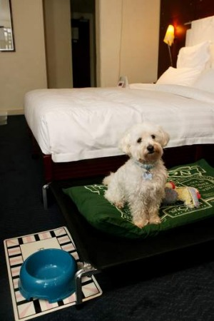 A pet-friendly hotel.