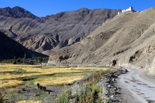 The Manali-Leh highway near the Indus Valley in Ladakh.