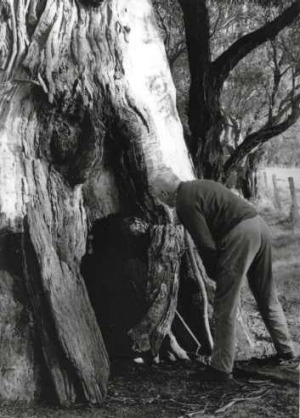 Noted folklorist John Meredith OAM inspecting the 'Fairy Tree'  July, 1992