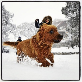 @andyrails its'a  dogs life at buller