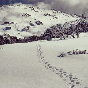 @jamesgarner_ perisher foot steps