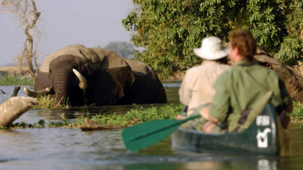 Big dip: elephants share the river with passing paddlers.