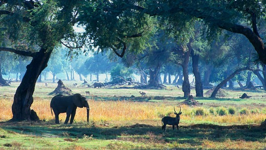 Pristine appeal: Residents of Mana Pools National Park.