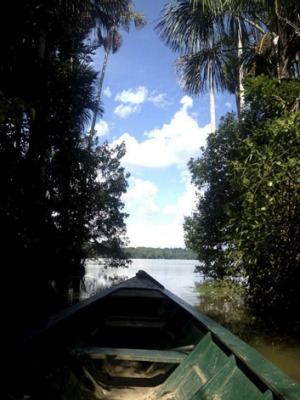 A trip in the Peruvian rainforest can end in illness and tragedy.