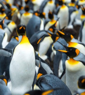 King penguins inhabit the continent.