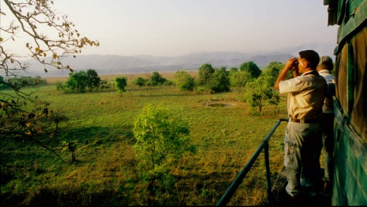Jim Corbett National Park.