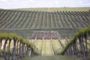 SHD TRAVEL September 15 Orange food and wine - text by Nina Karnikowski. Cumulus Wines Estate. Pic supplied by ...