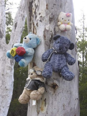 Teddies on a tree between Queanbeyan and Bungendore.