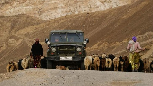 A rally car shares the road in Pamir with livestock.