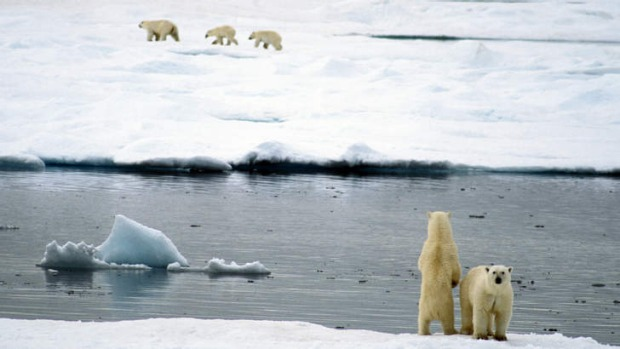Freeze frames: polar bears head the list of reasons to visit the Arctic.