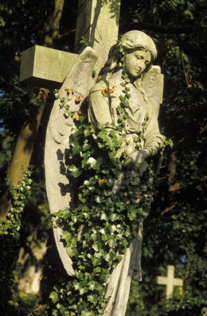 Mourning glory at Highgate Cemetery, London.