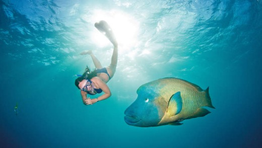 A snorkeller with a murray wrasse.