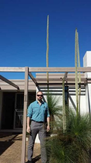 The stem on this Grass Tree in Oxley wasn't quite tall enough to claim the prize as Canberra's tallest