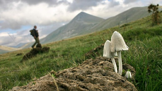 Wild mushrooms in Abruzzo.