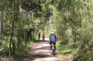 Pic supplied for Sunday Age Travel 19-3-2006. The Old Beechy Rail Trail runs from Colac to Crowes through the Otway Ranges.