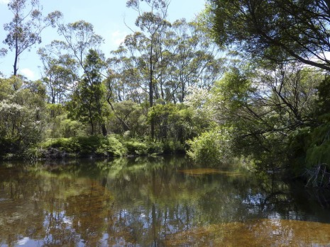 The swimming hole atop Carrington Falls.