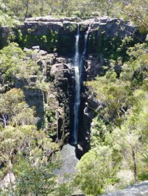 Carrington Falls – a 50 metre drop