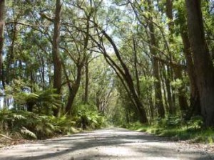 Driving through the rainforest to Belmore Falls