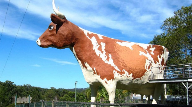 The Big Cow at Nambour: Wikipedia.