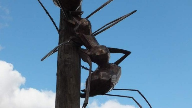 The Big Meat Ant at Augathella: Wikipedia.