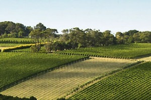 All better now: Montalto Winery on Victoria's Mornington Peninsula.