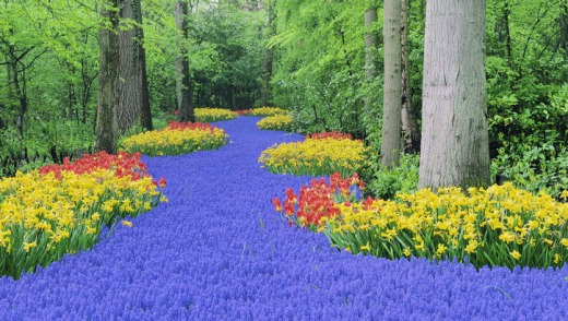 Greenies: the stunning forest carpet at Keukenhof, Netherlands.
