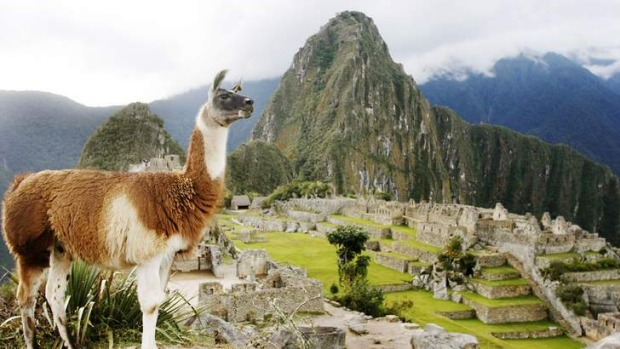 A llama stands in front of the Inca citadel of Machu Picchu in Cuzco.