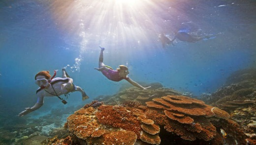 The view: Snorkelling at the Great Barrier Reef.