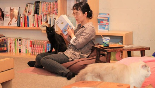 Cateriam supplies cats for petting.