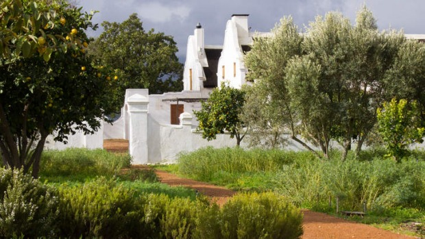 Indigenous buchu and other herbs grow amid lemon and olive trees.