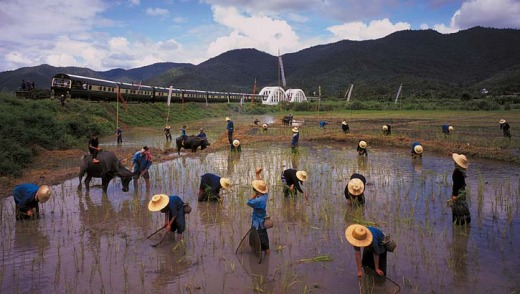 The train passes workers in a rice field.