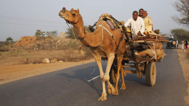 Camel pulling cart on a Rajasthan road.