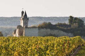 Vineyards near to the chateau of Chinon, Indre-et-Loire, Loire Valley, France