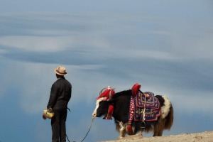 This photo was taken in June 2014 on a road trip from Lhasa to Kathmandu.  Words do not do justice to the mesmerizing beauty of the plataeu and the people of Tibet but when I close my eyes I can still see the proud herdsman with his noble yak as he stood gazing over Lake Yamdrok and dreaming of Tibet. Photo: Glenda Key