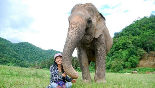 Friendly elephant.