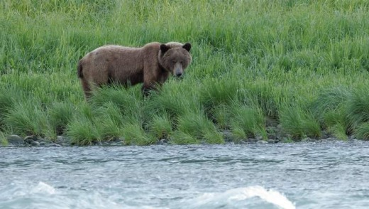 A bear in the wild.