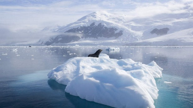 Unforgettable: an Antarctic fur seal on an ice floe.