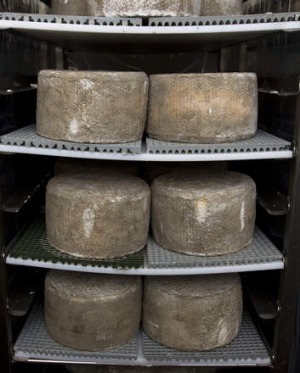 Blue vein cheese maturing at Apostle Whey Cheese.