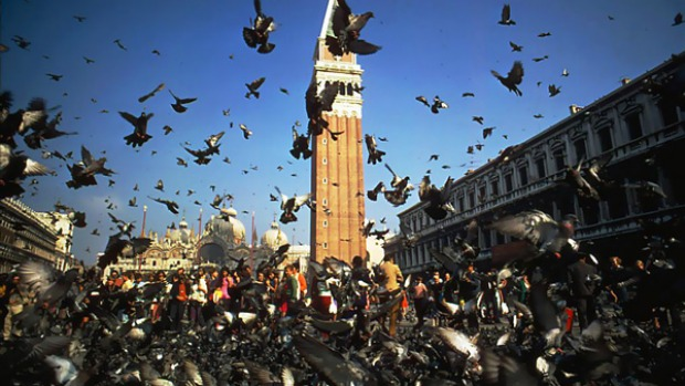 Leaving their mark ... pigeons delighted generations of tourists in St Mark's Square.