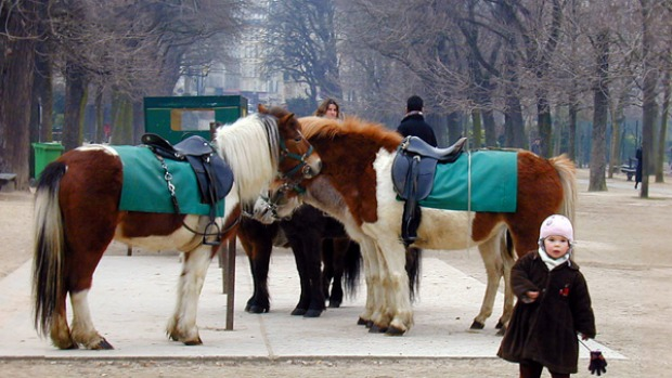 Horseplay . . . pony rides in the Jardin du Luxembourg are a quintessential Paris experience.
