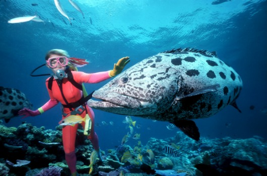 Great Barrier Reef, Queensland - the world's largest coral reef comprises more than 3,000 individual reef systems and ...