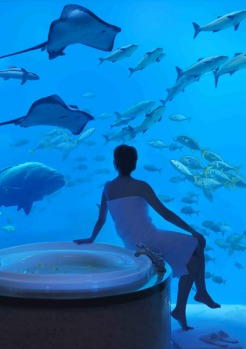 When it comes to imagining you're somewhere else, it's hard to beat Dubai's Atlantis, The Palm. Inside the Poseidon ...