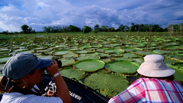 Deepest Amazon ... giant water lillies.