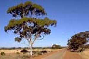 A typical wheatbelt road south of Beacon