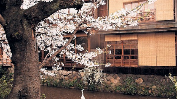 Cultural heart ...Kyoto's wooden machiya houses are being restored.