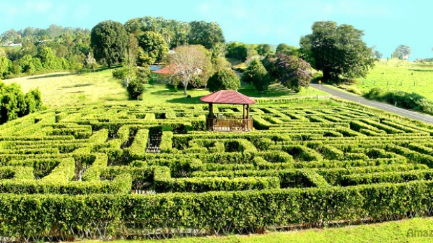 Which way out ... the vast hedge maze at Amaze 'n' Place.